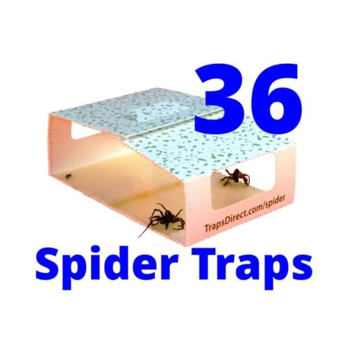 Spider Control for apartments or campers